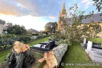 """Omgewaaide boom beschadigt graven: """"En ik die dacht dat mijn overleden familie hier rustig zou liggen"""""""