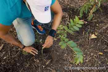 Popular realiza jornada de reforestación en San Francisco de Jacagua - Spanish Version - Periódico Digital Centroamericano y del Caribe