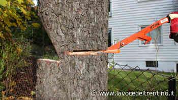 Per realizzare la ciclopedonale di Povo verranno abbattuti 5 alberi - la VOCE del TRENTINO