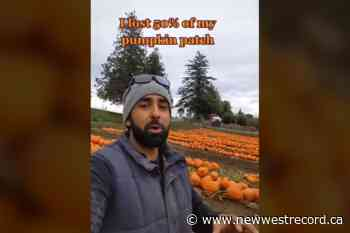Metro Vancouver pumpkin patch makes the best of a mass pumpkin-die off - The Record (New Westminster)