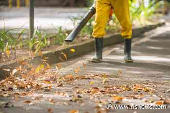 West Vancouver district to look into banning gas-powered leaf blowers - North Shore News