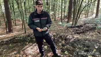 Vandalismus und Selbstjustiz: Streit um illegalen Mountainbike-Trail im Wald Reinbek eskaliert | shz.de - shz.de