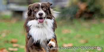 Welthundetag: Wir suchen die schönsten Hundefotos