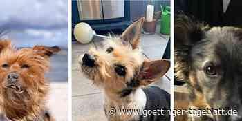 Welthundetag: Das sind die schönste Hundefotos der Leser