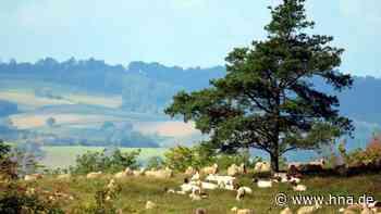 Landschaftspflegeverband in Hersfeld-Rotenburg wird gegründet - HNA.de