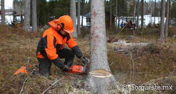 Dirección de Ecología soledense habla sobre tala de árboles - La Orquesta