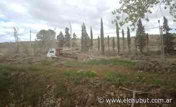 Rawson: Ambiente Municipal intervino ante denuncia de tala indiscriminada de árboles - Diario EL CHUBUT