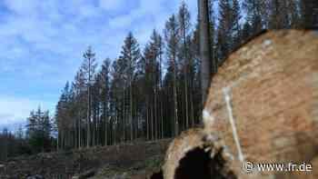10 000 Bäume für den Hofheimer Stadtwald - fr.de