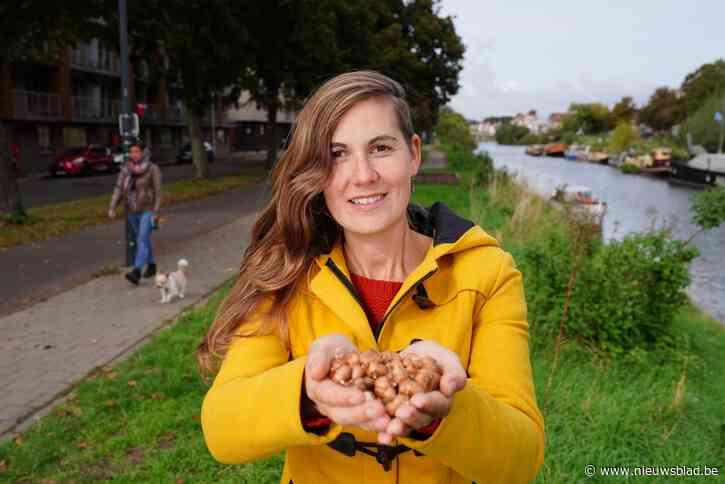"""Gents MilieuFront wil 20.000 bloembollen planten: """"Einddoel is hele Coupure vol voorjaarsbloemen"""""""