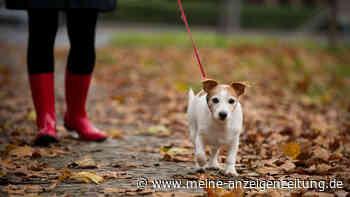 Spanien: Hunde bald nicht mehr im Geschäft kaufen - neues Tierschutz-Gesetz