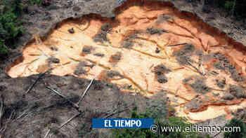 La Amazonía perdería unas 860.000 hectáreas en 2021 - El Tiempo