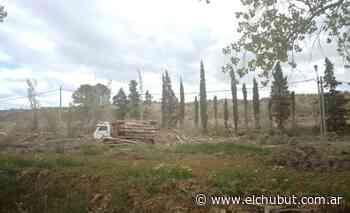 Ambiente Municipal intervino ante denuncia de tala indiscriminada de árboles - Diario EL CHUBUT