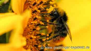 Studie: Menschen sind schädlicher für Insekten als der Klimawandel