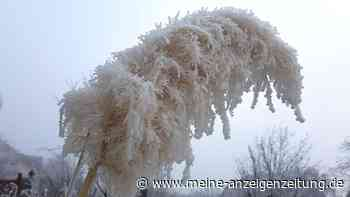Pampasgras im Garten: So helfen Sie der Pflanze über den Winter