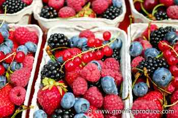 Organic Fresh Produce Sales Up 3%in Third Quarter