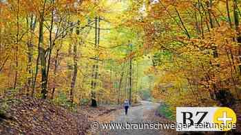 "Verein bietet in Meerdorf ""Waldbaden"" an"