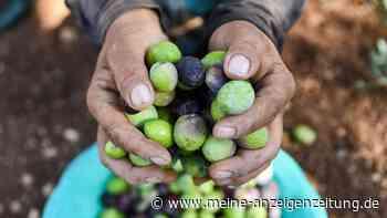 Warnung vor gefärbten Oliven – Produkte ohne Schadstoffe erkennen