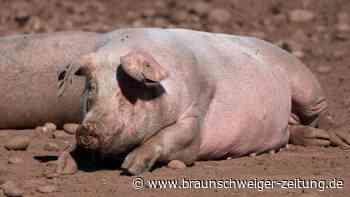 London will 1000 Schlachter aus Ausland wegen Schweinestau