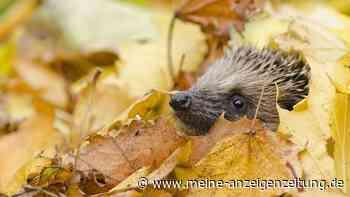 Laub als Lebensraum: Diese Tiere leben in den Blättern