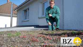 Braunschweig: Dachbegrünung ganz in Eigenregie