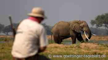 Elefant trampelt Touristen in Nationalpark in Simbabwe tot