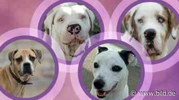 Coesfeld - Vier Hunde gerettet: Wir suchen ein neues Zuhause! - BILD
