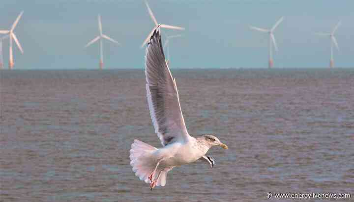 Sustainable development of offshore wind receives $13.5m boost