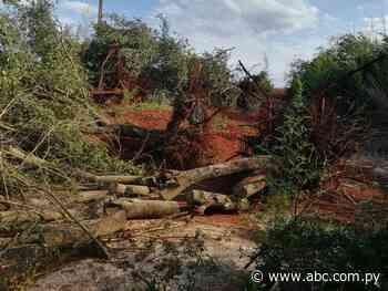 Constatan tala de árboles de varias especies nativas - ABC Color