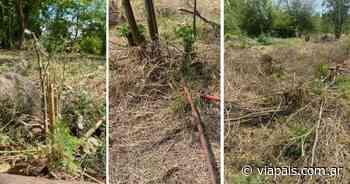Denuncian a la Municipalidad de Córdoba por tala de 150 árboles nativos - Vía País
