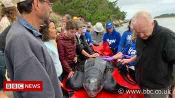 Stranded 600lb turtle returned to Atlantic Ocean