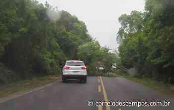 Chuvas e ventos fortes derrubam árvore e bloqueiam rodovia em Ponta Grossa - Correio dos Campos