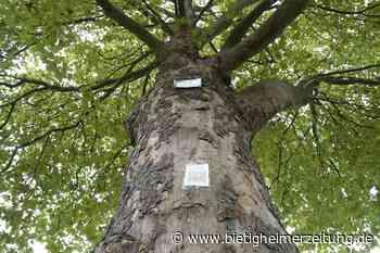 Bietigheimer Baumlehrpfad wird aktualisiert: Baum-Infos jetzt auch aufs Handy - Bietigheimer Zeitung