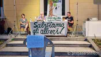 Venerdì a Tradate incontro pubblico a difesa degli alberi di piazza Mazzini - Prima Saronno