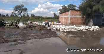 Campo en Irapuato: 3 mil hectáreas de sembradíos se afectaron por lluvias - Periódico AM