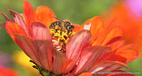 How to secure USDA funds to establish pollinator habitat on your land