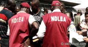 NDLEA arrests 134 in Jigawa - Daily Trust