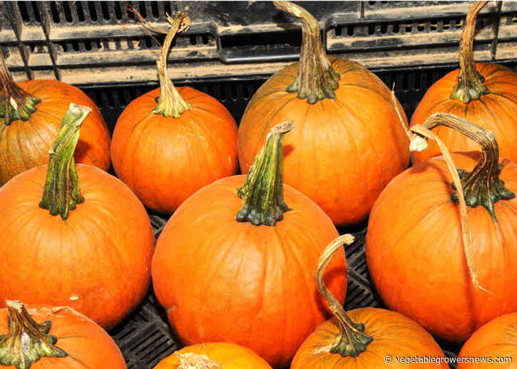 Value of Texas pumpkin production surpassed other states at $25.9M in 2020