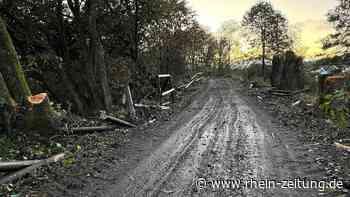 Naturfreunde erschüttert: Kleinholz aus Bäumen an Freizeitstrecke bei Rennerod gemacht - Rhein-Zeitung