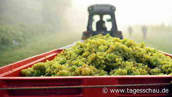 Folge des Klimawandels: Wird Großbritannien zur Weininsel?