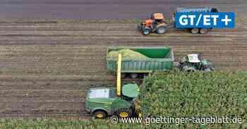 Mit dem Häcksler über das Feld: So läuft die Maisernte in Garbsen ab