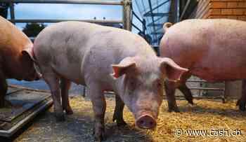 Fleischindustrie - Bratwurst made in Spanien für die Chinesen