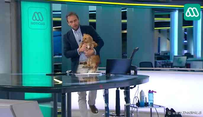 """VIDEO. """"¿Se hizo pipí recién?"""": Rodrigo Sepúlveda sufrió particular chascarro en vivo tras visita de una perrita"""