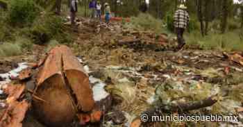 Niegan permisos para tala de árboles en la Malinche - Municipios Puebla
