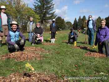 Trees planted in Rainbow Park - Sarnia Observer