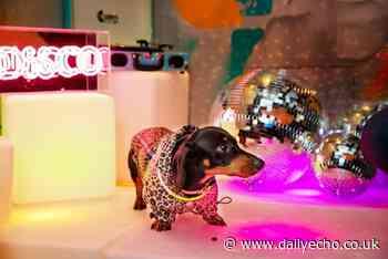 Dachshund Disco will take place at Revolucion de Cuba in Southampton