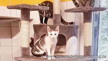 Tierheim-Kätzchen Gurke und Azubi suchen Zuhause