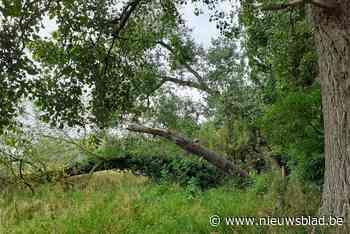 """30 bomen in de Bourgoyen worden gekapt: """"De kans op ongelukken wordt steeds groter"""""""
