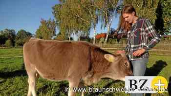 In Stederdorf leben glückliche Kühe: Amelie,Dorie und Lorela
