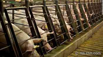 Pork is already expensive. This animal-welfare law could push prices higher