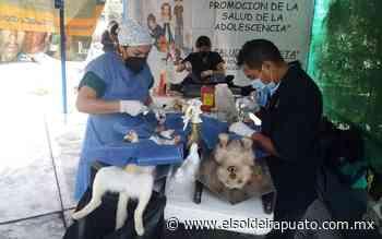 Habrá jornada de esterilización en Pueblo Nuevo - El Sol de Irapuato